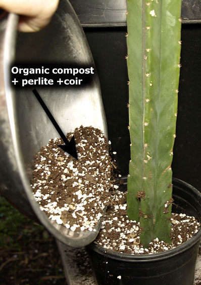 potting soil for rooting san pedro cactus cuttings